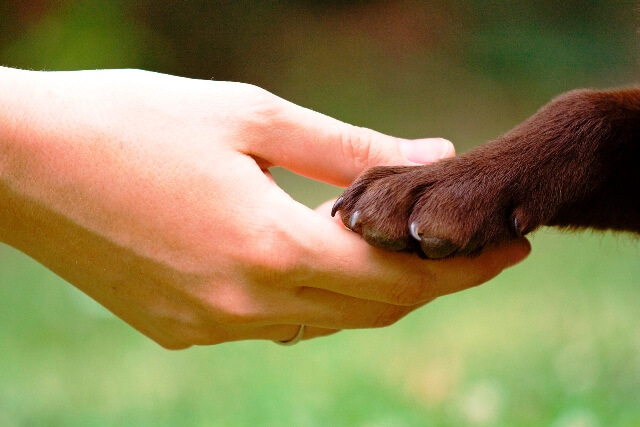Hayvanlara İşkence Eden İnsanlara Verilen Cezalar Nelerdir